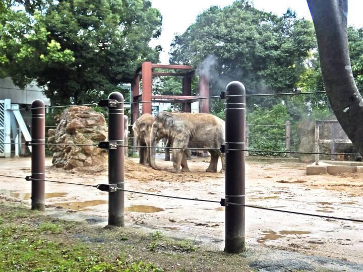 สวนสัตว์อุเอะโนะ 15