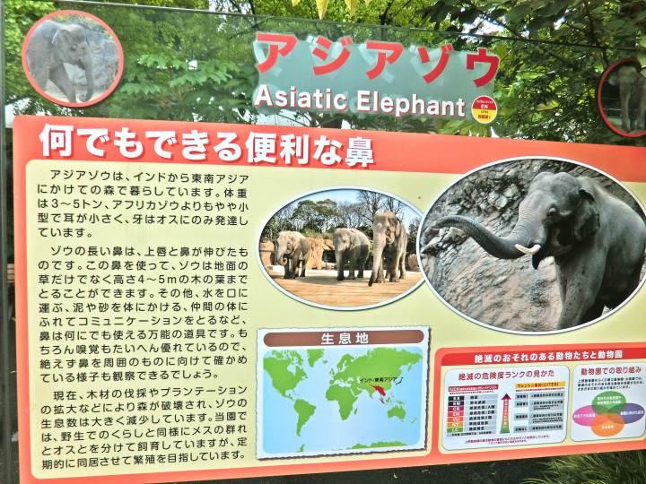 สวนสัตว์อุเอะโนะ 16