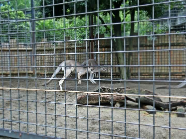 สวนสัตว์อุเอะโนะ 25