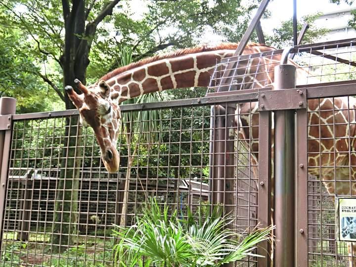 สวนสัตว์อุเอะโนะ 30