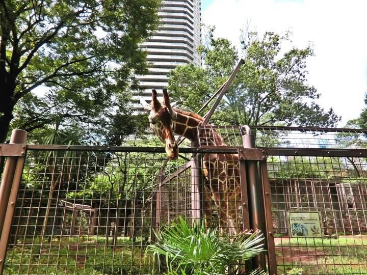 สวนสัตว์อุเอะโนะ 31