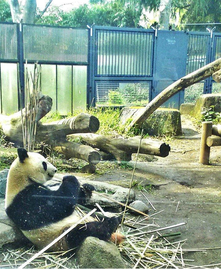 สวนสัตว์อุเอะโนะ 34