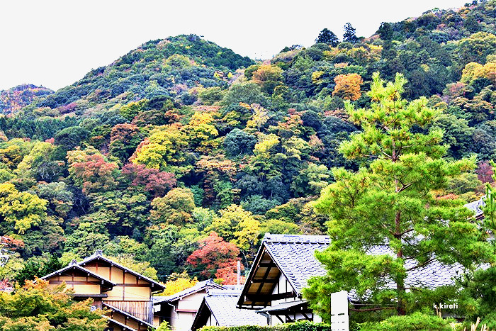 ใบไม้เปลี่ยนสีที่ อาราชิยามะ เกียวโต