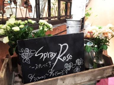 aoyamaflower