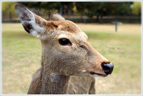 nara-deer-1_meitu_15