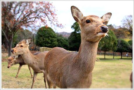 nara-deer-2_meitu_16