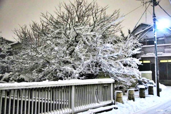 หิมะแรกในโตเกียวปี2016