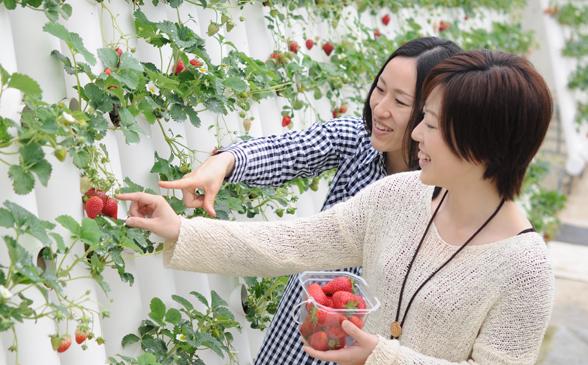 2014strawberry(588-365)