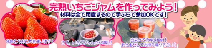 strawberrybustour