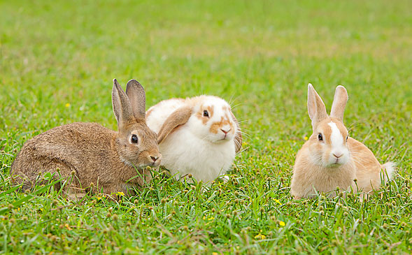 pic_rabbit_01