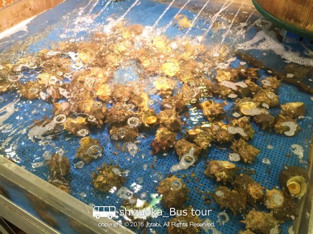 seafoodbuffet