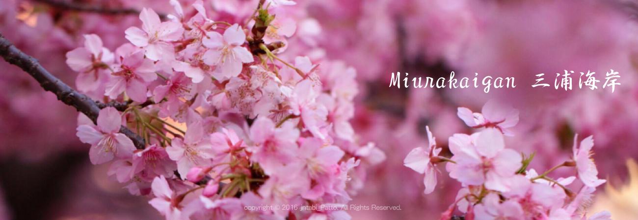 Miurakaigan