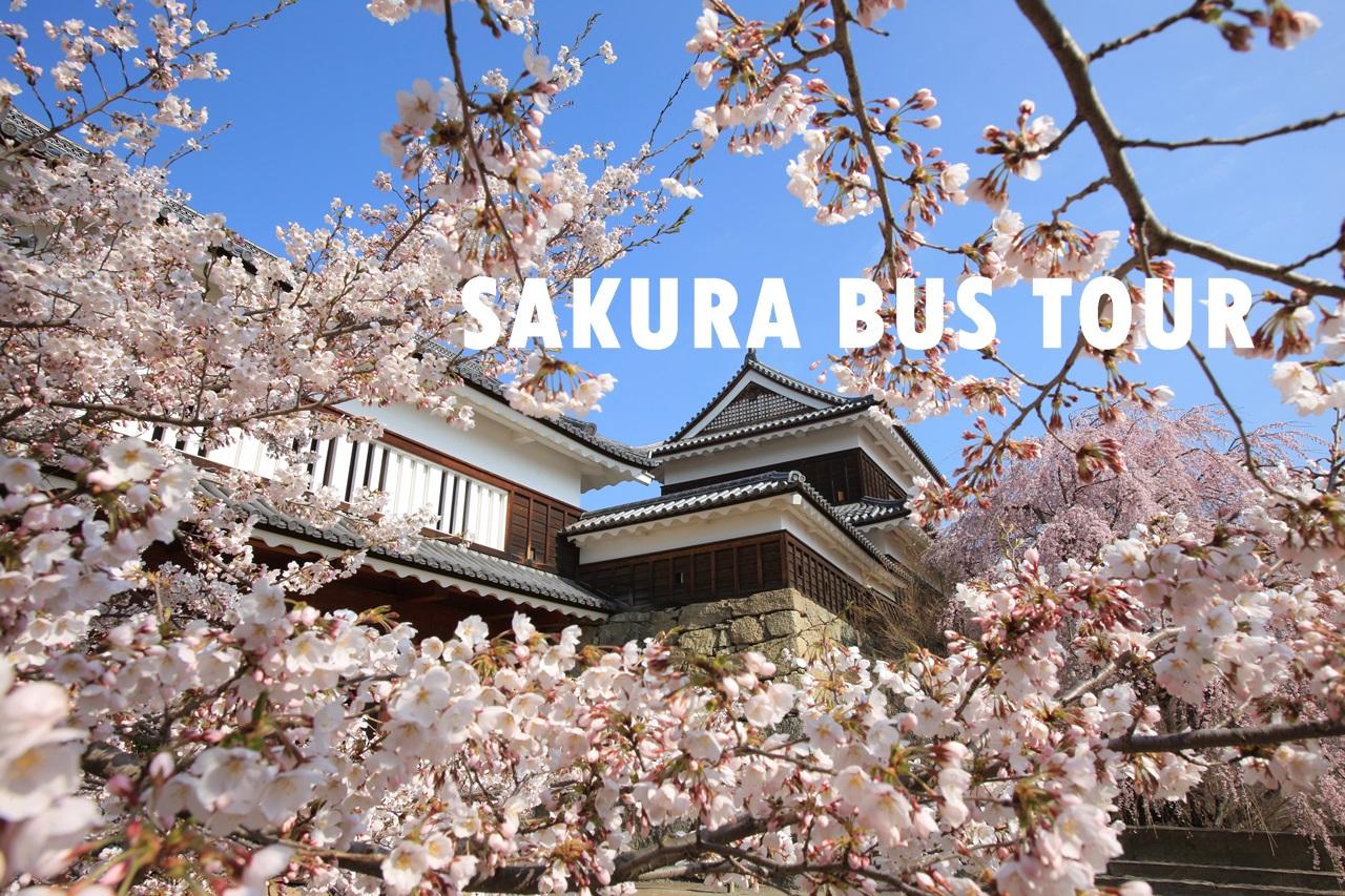 上田城跡公園内 桜 (11)