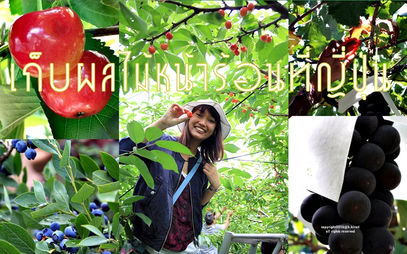 TIC Blog_Fruit_th